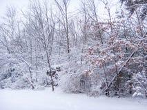 Torkar sceniska kalla träd för den snöig snönaturvintern den våta djungelskogen Royaltyfria Bilder