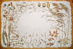 Torkat änggräs på sanden Arkivbilder