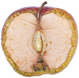 torkat äpple Arkivbild