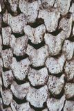 Torkat abstrakt gömma i handflatan upp texturbakgrundsslut royaltyfri bild