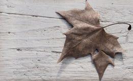 Torkat blad av golvet för pisangfauxsten Fotografering för Bildbyråer