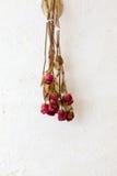 Torkat för blommaram för röda rosor utrymme för kopia för mellanrum på den vita väggen Royaltyfri Bild