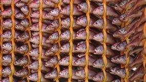Torkat fiske som hängs trevligt i rader på ett traditionellare, shoppar i Songjeong stationsmarknad Royaltyfri Fotografi