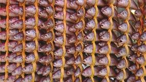 Torkat fiske som hängs trevligt i rader på ett traditionellare, shoppar i Songjeong stationsmarknad Arkivbild