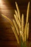 torkat gräs Arkivbilder