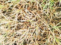 Torkat gräs dör arkivbild