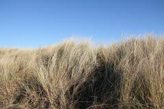 Torkat gräs och blå himmel Royaltyfria Bilder