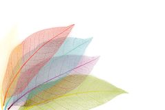 torkat leafskelett Royaltyfri Bild