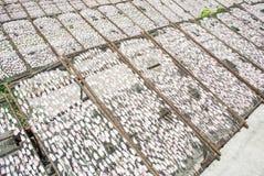 torkat netto tioarmad bläckfisksolljus Royaltyfri Bild