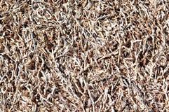 torkat ris Fotografering för Bildbyråer