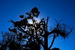 Torkat träd mot den blåa himlen och solen royaltyfria bilder