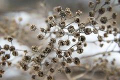 Torkat upp nedgångväxter i en äng arkivfoton