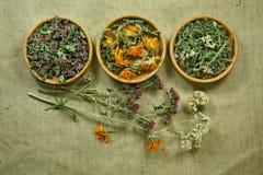 torkat Växt- medicin, phytotherapy medicinska örter Arkivfoton