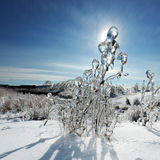 Tormenta de hielo Fotos de archivo libres de regalías