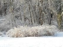 Tormenta de hielo Imágenes de archivo libres de regalías