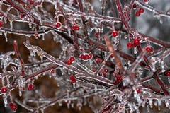 Tormenta de hielo del invierno Imagen de archivo