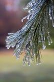 Tormenta de hielo del invierno Fotos de archivo libres de regalías