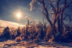 Tormenta de hielo solar del invierno Imagen de archivo