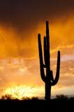 Tormenta de la monzón de AZ Imagenes de archivo