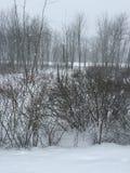 Tormenta de la nieve Fotografía de archivo