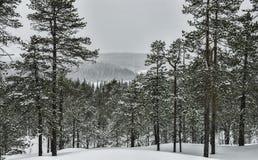 Tormenta de la nieve en un bosque Fotos de archivo libres de regalías