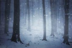 Tormenta de la nieve en un bosque con niebla por la tarde del invierno