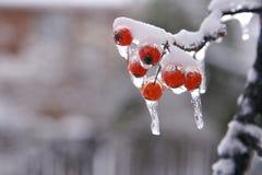 Tormenta de la nieve y de hielo Foto de archivo libre de regalías