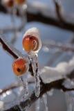 Tormenta de la nieve y de hielo Imagen de archivo libre de regalías