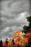 Tormenta del verano Imagen de archivo libre de regalías