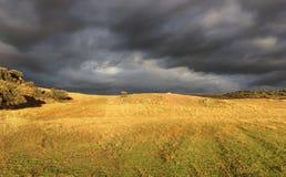 Tormenta en un campo de la hierba amarilla a la tarde del verano imágenes de archivo libres de regalías