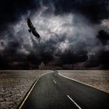 Tormenta, pájaro, camino en desierto Foto de archivo libre de regalías
