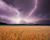 Tormenta sobre trigo Fotos de archivo