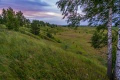 Tormenta violenta en campo verde Un fuerte viento sopla la hierba en el prado y presiona el abedul a la tierra imagen de archivo