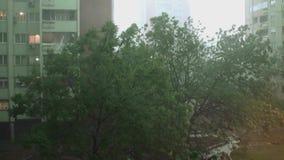 Tormenta y Heavy Rain 4 - fuertes lluvias y tormenta muy fuerte Los árboles se están moviendo fuertemente a la izquierda e a la d almacen de metraje de vídeo