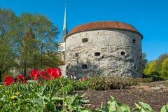 Torn av den gamla staden estonia tallinn Royaltyfri Foto