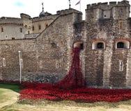 Torn av den London WW1 vallmominnesmärken Arkivbilder
