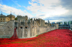 Torn av London med havet av röda vallmo som minns de stupade soldaterna av WWI - 30th Augusti 2014 - London, UK Royaltyfri Fotografi