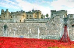 Torn av London med havet av röda vallmo som minns de stupade soldaterna av WWI - 30th Augusti 2014 - London, UK Arkivbild