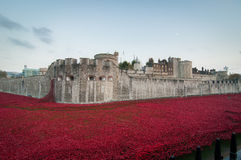 Torn av London Poppy Display Arkivbilder