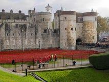 Torn av London vallmo Royaltyfri Foto