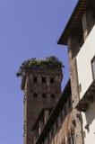 Torn av Palazzo Guinigi i Lucca Royaltyfri Fotografi