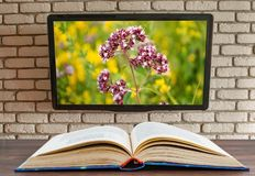 Torn book on the table tv on the wall of decorative brick stock image