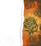 Torn cardboard with roses Royalty Free Stock Photos