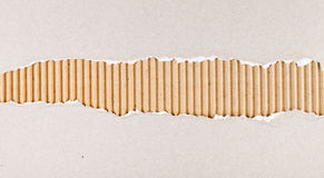 Torn cardboard texture with great detail. Torn gray cardboard revealing corrugated brown layer texture with great detail royalty free stock photo