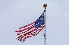 Torn flag Royalty Free Stock Photography
