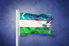 Torn flag of Uzbekistan flying against grunge background Stock Photos