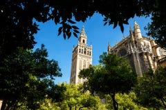 Torn Giralda till och med träden Royaltyfri Bild