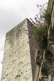 Torn och blomma Royaltyfria Foton