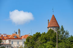 Torn och sommarhimmel av Tallinn den gamla staden Estland Europa Royaltyfri Fotografi