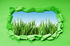 Torn paper with grass Royalty Free Stock Photography